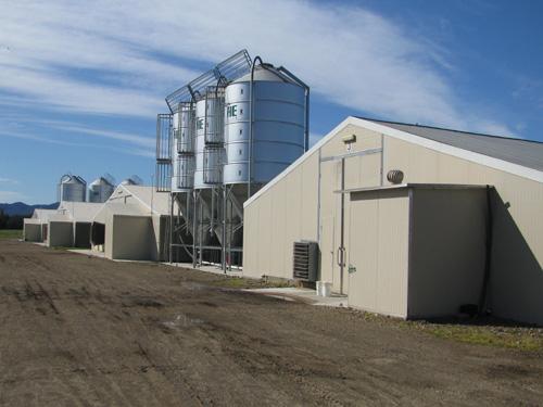 poultry sheds development